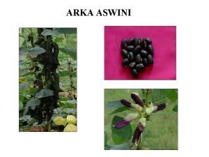 Arka_Aswini40715140_0